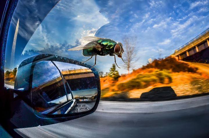 Jakie bezpiecznie usunąć owady z karoserii❓  Bezpiecznie ⤵⤵⤵ nie uszkadzając lakieru. Na rynku jest…